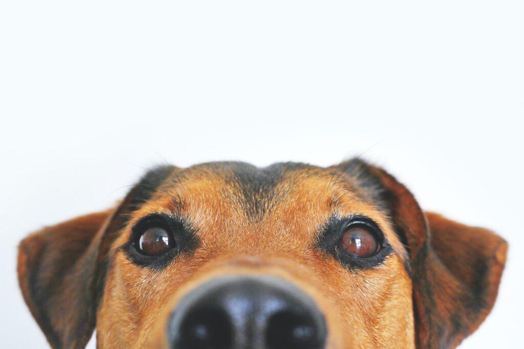 Canine covid testing